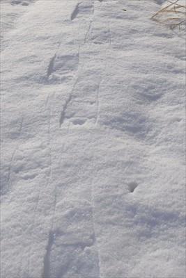 雪面は固いけど、その下は柔らか...