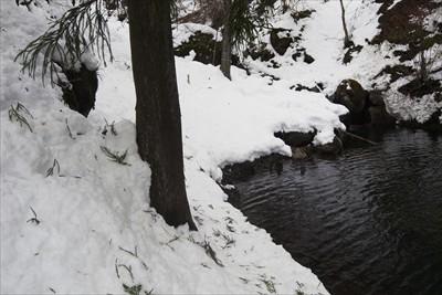 水量が多い時は真ん中の木の所ま...