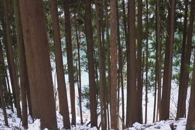 ・・・樹林帯に突入。ここまで来...