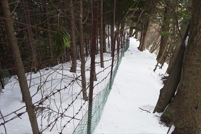 柵沿いの急斜面を下る。...