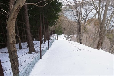 ・・・再び柵の横を進む。何枚か...