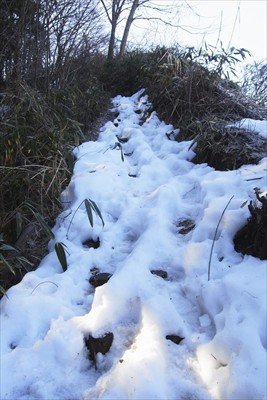 すぐに小さな尾根に乗ります。雪...