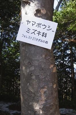 この辺りの木にはこのように樹木...
