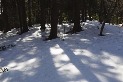 雪の締りが中途半端なので、足が...