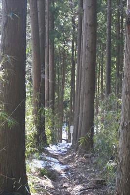 杉の回廊。...