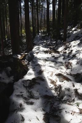この辺りは雪が深いので歩きづら...
