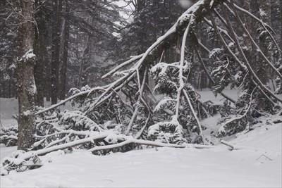 倒木が行き先を遮っていた。開山...