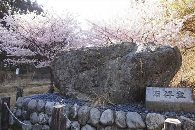 座禅石と桜。...