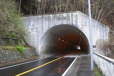 梅の木トンネル。...
