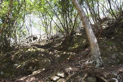上を見上げる。完全な岩場になっ...