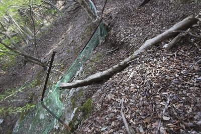 振り返ってみる。倒木で柵が崩壊...
