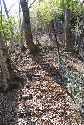 やっぱり尾根には鹿柵があった。...