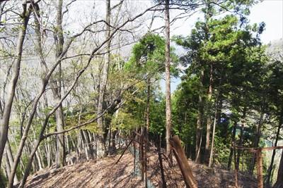 鹿柵の右側が植林地体で左側が広...