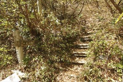 林道を進むとすぐに赤坂山への分...