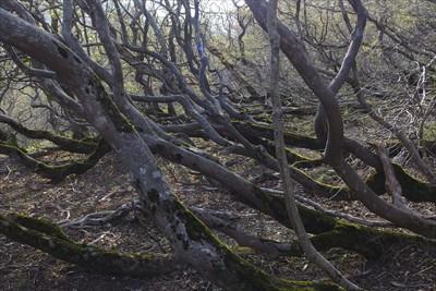 木が生きているよう・・・。...