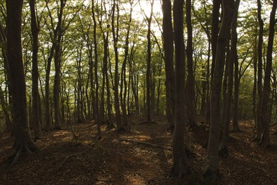 鬱蒼としや樹林帯に突入。たしか...