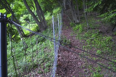 ここの両側に鹿柵のある所は所々...