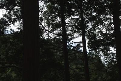 木々の間の向こう側の尾根に12...
