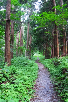 まだこの辺は神社林なのかな〜。...