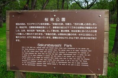 ふむふむ、ここの桜は吉野桜なの...