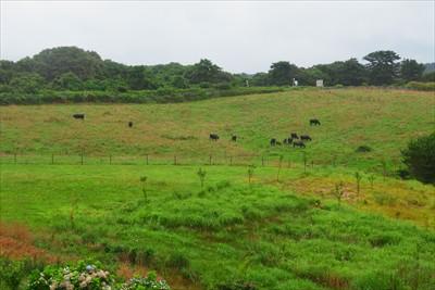 牧草地に牛が・・・って思ったけ...