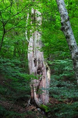 雰囲気のある木があった。一瞬、...