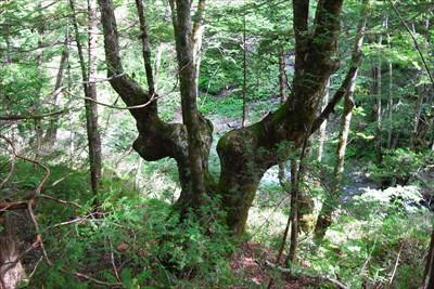 鹿の角みたいな形の木があった。...