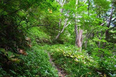 ここからは徳本峠への登りが始ま...