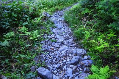 岩がゴロゴロした道になった。...