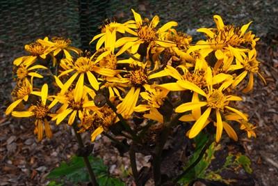 ・・・黄色い花でした・・・。...