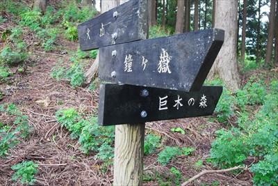 右に折れると巨木の森らしい・・...