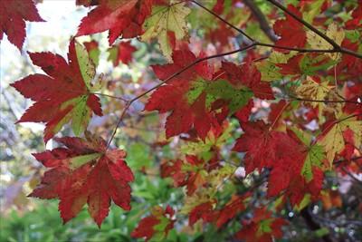 紅葉がキレイ。...