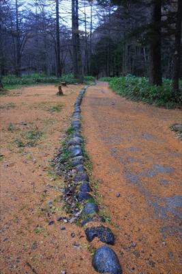 落葉松の落葉が絨毯のように落ち...