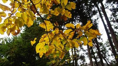 所々に黄色く黄葉した木はある。...