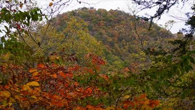 仏果山。こう見ると紅葉真っ盛り...