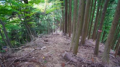 再び植林地の急な斜面を下る。...