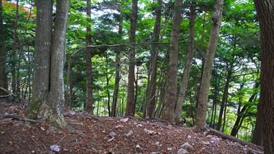 ここを左に折れると向山トンネル...