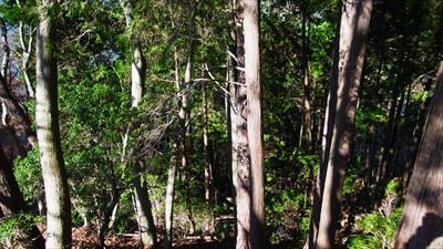 樹林帯に突入。...