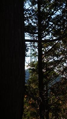 木々の間に11号鉄塔が見える。...