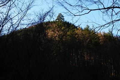 例の一際高い木(詳細はこちら→...