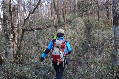 歩く人が少ないのか、登山道上に...