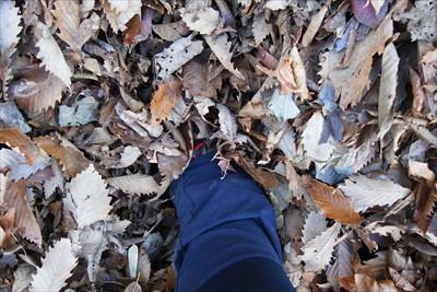 落ち葉! 足が埋まるぅ〜。...