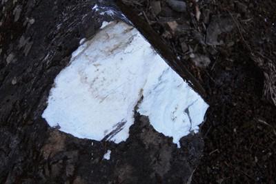 遠くからでも岩の一部が白くなっ...