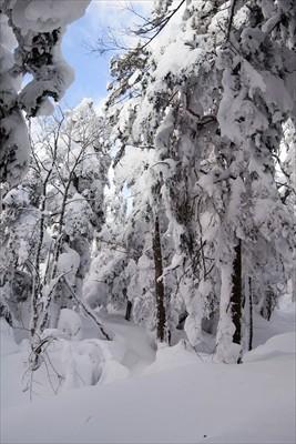 まさに雪山な景色。...