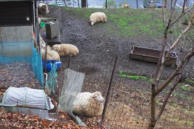 あっ! 羊だ・・・。って思った...
