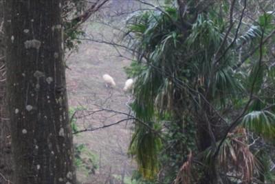 おっ!、さっきの羊が見えた。...