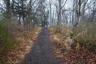 歩きやすい尾根道を進む。...