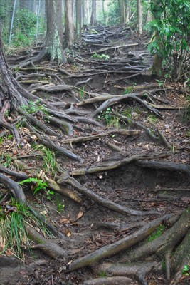 再び登り返す。木の根が剥きだし...