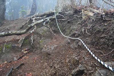 ロープがある。登りは必要ないけ...