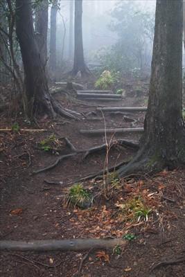 高取山への最後の登り。ここで雨...
